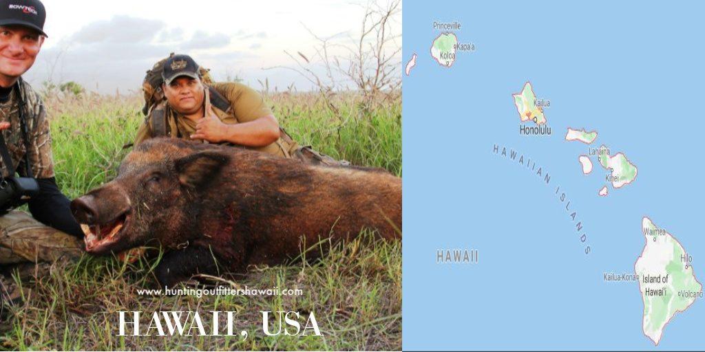 hawaii wildlife